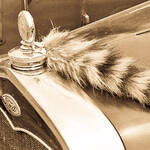 Classic and Antique Cars
