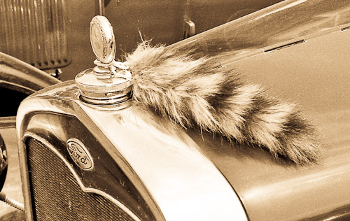 Coon tail on Radiator cap: Model A